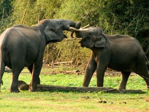 elephant_kerala_tour.jpg