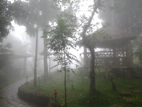 wayanadu-tour-kerala.jpg